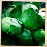 Cabbage_Directory