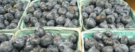 Blueberries_DT